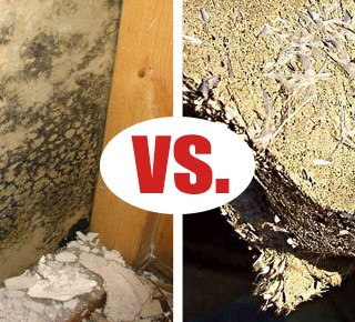 Mold versus Asbestos
