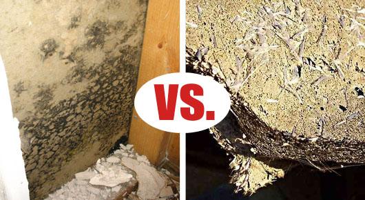Mold vs  Asbestos | Environmental Services