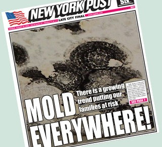 Mold in the News Headlines